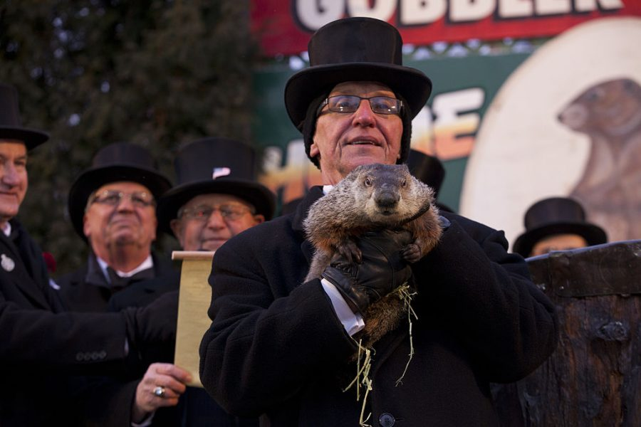 Punxsutawney+Phil+is+held+aloft+on+Groundhog+Day+in+2013.